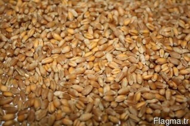 6 видов пшеницы 3го класса с протеином от 12.6% до 14%