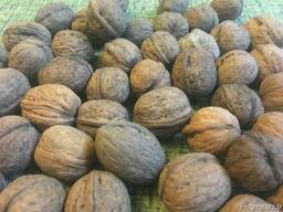 Грецкий орех в скорлупе / Walnut in shell