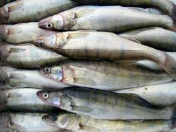 Рыба речная