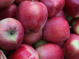 Яблоки , apple