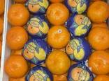 Апельсин - фото 1