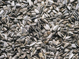 Calibrated sunflower kernels, in bulk from the manufacturer