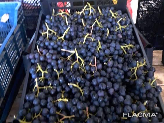 Черный виноград «ПРИМА» (поставка с 28 недели)
