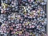 Черный виноград «ПРИМА» (поставка с 28 недели) - фото 2