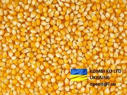 Corn \ Кукуруза