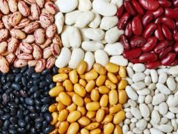 Fasulye, keten tohumu, mercimek, nohut, bezelye ve diğer tarım ürünleri.