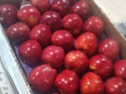 Из Турции оптовая продажа яблок