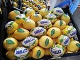 Лимоны из солнечной Турции - photo 3