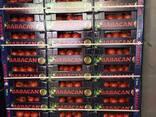 Овощи 2017 новый сезон от фабрики babacan import export - фото 5