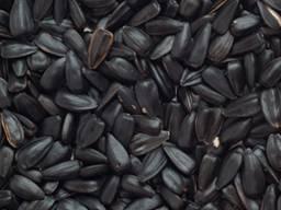 Подсолнечник масличный