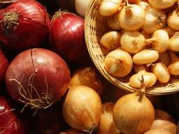 Предлагаем к приобретению лук из Туркмении