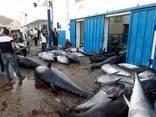 Продажа оптом морской рыбы из Африки в любую страну - фото 3