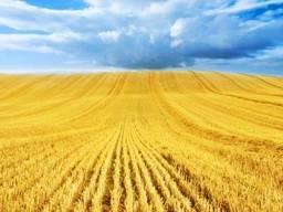 Российская. пшеница (12, 5 прот. 25% клейков)