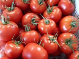 Свежие овощи высшего качества