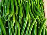 Свежие овощи высшего качества - фото 8