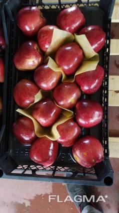 Яблоко свежее Турция