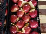 Яблоко свежее Турция - фото 4